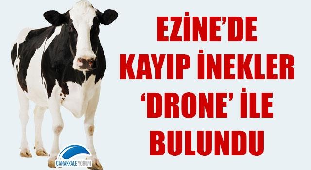 Ezine'de kayıp inekler 'drone' ile bulundu