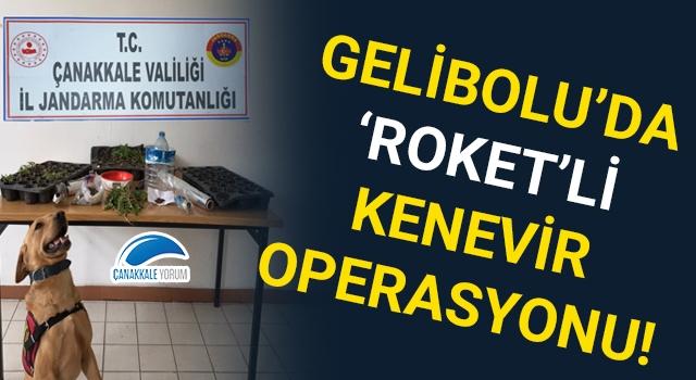 Gelibolu'da 'Roket'li kenevir operasyonu!