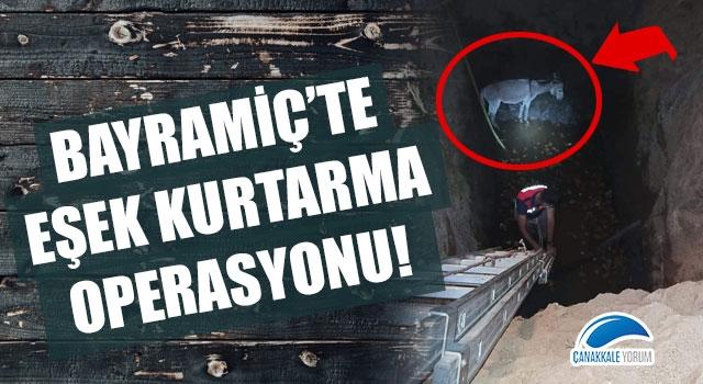 Bayramiç'te eşek kurtarma operasyonu!