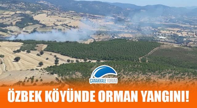 Özbek köyünde orman yangını!