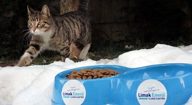 Limak Enerji, kış soğuklarında sokak hayvanlarını unutmadı