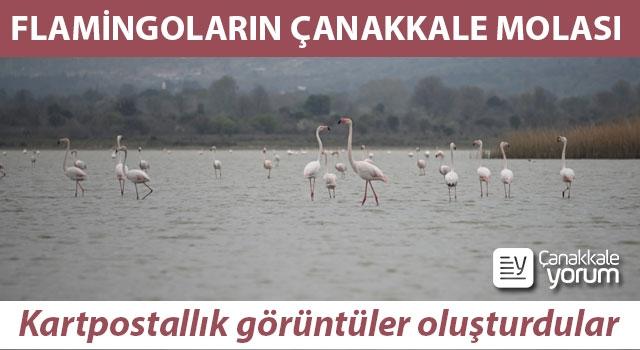 Flamingoların Çanakkale molası: Kartpostallık görüntüler oluşturdular