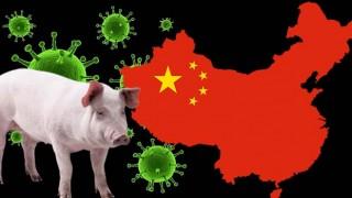 Çin'de yeni virüs paniği