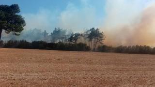 Bayramiç'te arazi yangını
