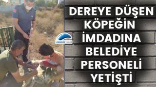 Ayvacık'ta dereye düşen köpeğin imdadına belediye personeli yetişti