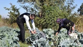 Başkan Öz, kadın çiftçilerle tarlada mahsul topladı