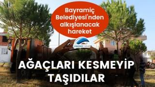 Bayramiç Belediyesi'nden alkışlanacak hareket: Ağaçları kesmeyip, taşıdılar