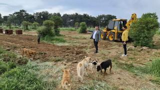 Ayvacık Belediyesi sokak hayvanları için düğmeye bastı: Rehabilitasyon merkezinde revizyon çalışması başlatıldı