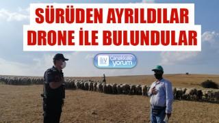 Gelibolu'da kaybolan 55 koyun drone ile bulundu