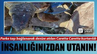 Parke taşı bağlanarak denize atılan Caretta Caretta kurtarıldı