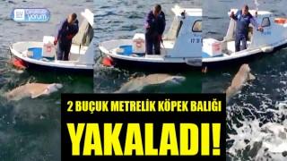 Boğazda olta attı, 2 buçuk metrelik köpek balığı yakaladı!