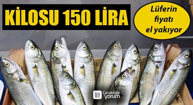 Çanakkale'de lüferin fiyatı el yakıyor: Kilosu 150 lira
