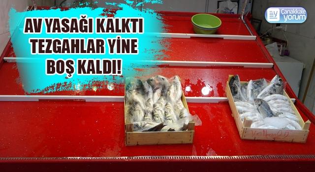 Denizlerde av yasağı kalktı, Çanakkale'de tezgahlar yine boş kaldı!