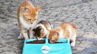 Limak'tan yaz sıcaklarında sokak hayvanlarına destek